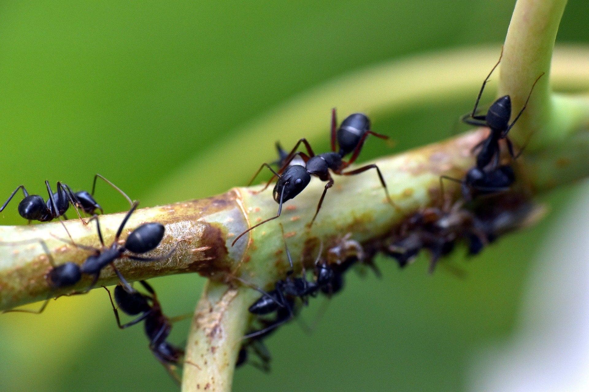 Des fourmis dans un jardin
